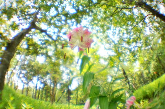 3071dsc_5286fisheye_lens560